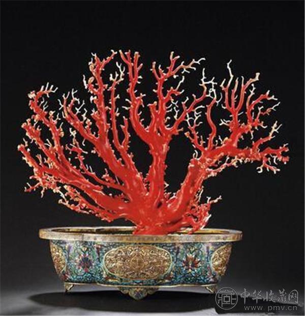红珊瑚树.jpg