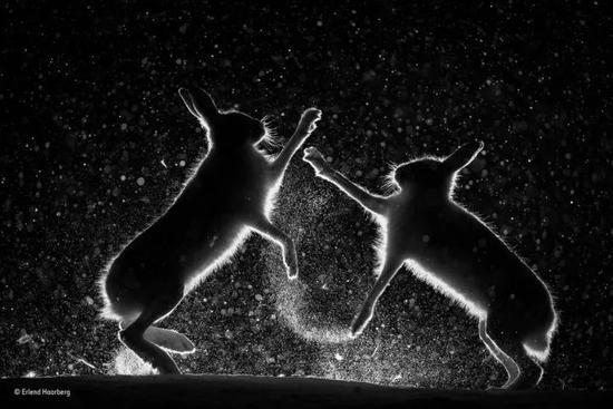 黑白组 最终入围 《雪中争斗》
