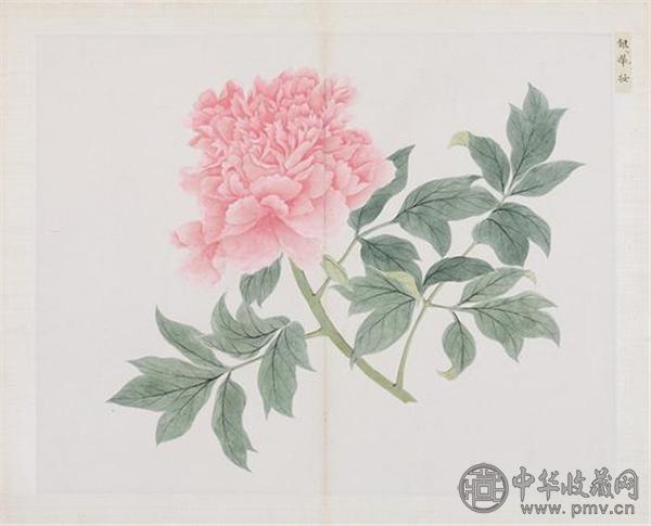 清 蒋廷锡(款)百种牡丹谱册.jpg