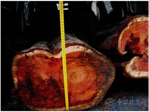红豆杉.jpg