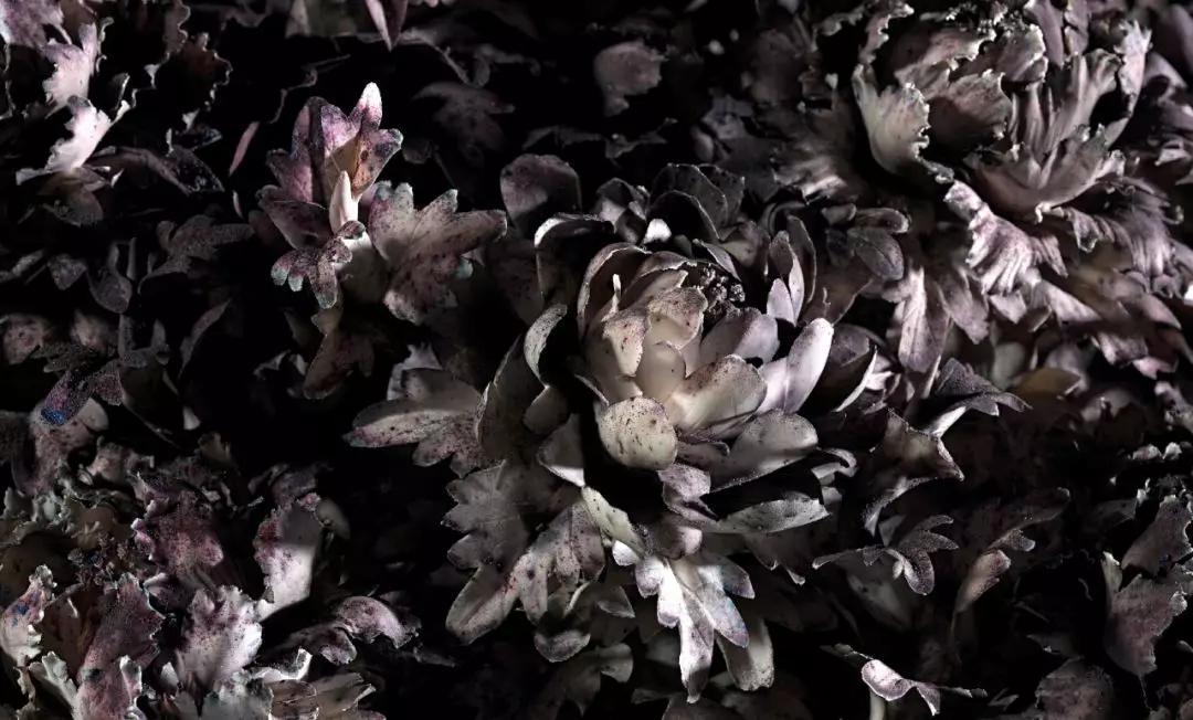 《花瞬一》爆破现场,2019,墨尔本  摄影:Tobias Titz
