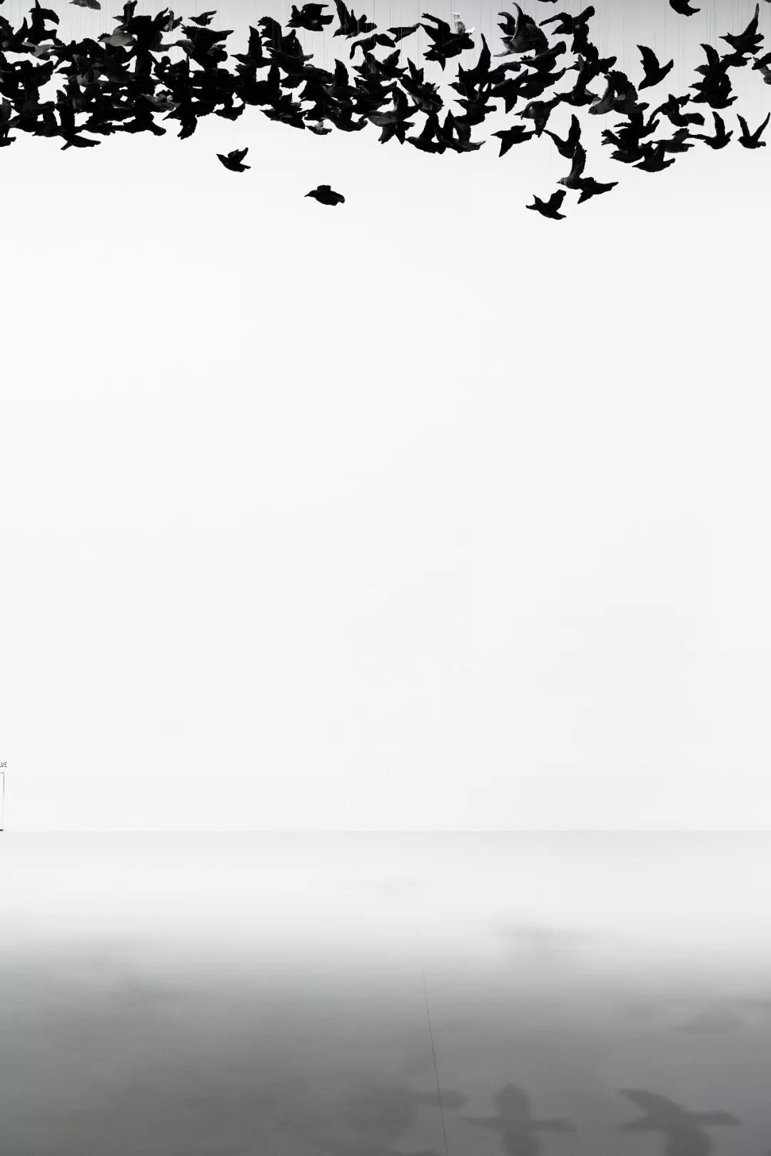 《鸟云》装置,2019,维多利亚州国立美术馆   摄影:Tobias Titz
