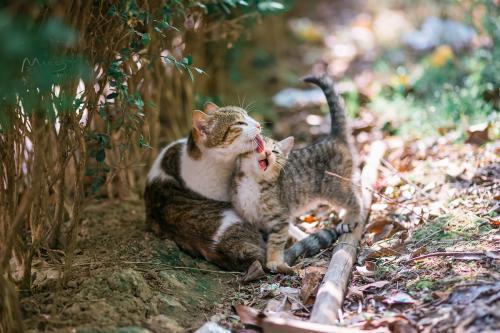 小猫刚吃完猫粮,回来向猫妈撒娇。受访者供图